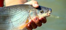 fish.jpg?itok=uGTpE0ZO