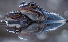 frogs.jpg?itok=9t1DzSS8
