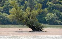 jds2-tree.jpg?itok=79KO_CLc