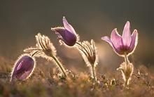 kudich-flowers.jpg?itok=U7OEKv6C
