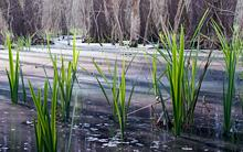 kudich-wetlands.jpg?itok=cbletmC4