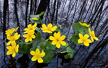 wetlands-kudich.jpg?itok=5QAH6x-4
