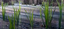 wetlands-zsolt-kurdich_0.jpg?itok=w8zBVGeb