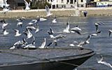 Next Steps Toward Environmentally Friendly Navigation