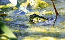 frog-in-stuff.jpg?itok=dHyqhBNn