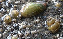 jds2-mussels-shells.jpg?itok=mGwB_0T7