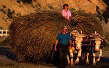 romania-farmers.jpg?itok=LLwvAfAu