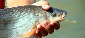 Practical advice for building fish migration aids